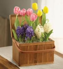 Blooming Bulb Garden in Handled Basket