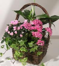 Blooming Gift Basket